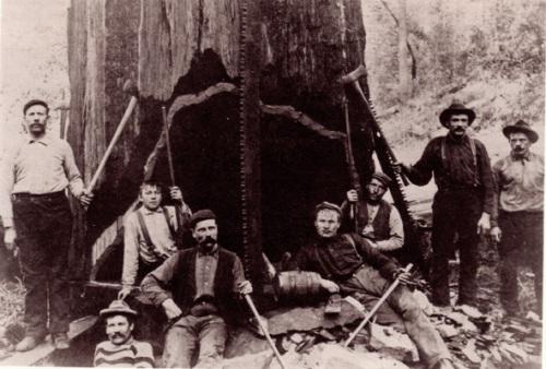 redwood%20loggers