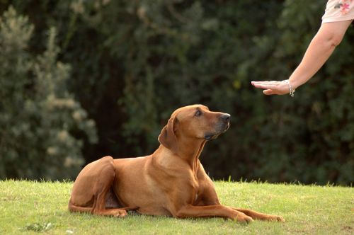 Positive-Training-Methods-of-Dog-Training1