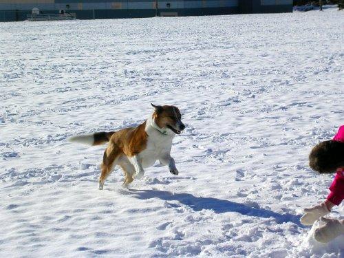 max-in-de-snow